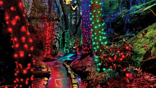 Path through a forest with decorated trees and holiday lights