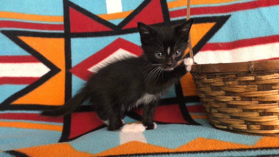 A black and white kitten on a patterned blanket with a brown basket