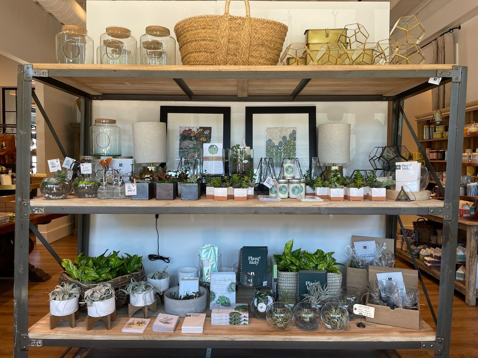 Succulents, pots, and vases on shelves