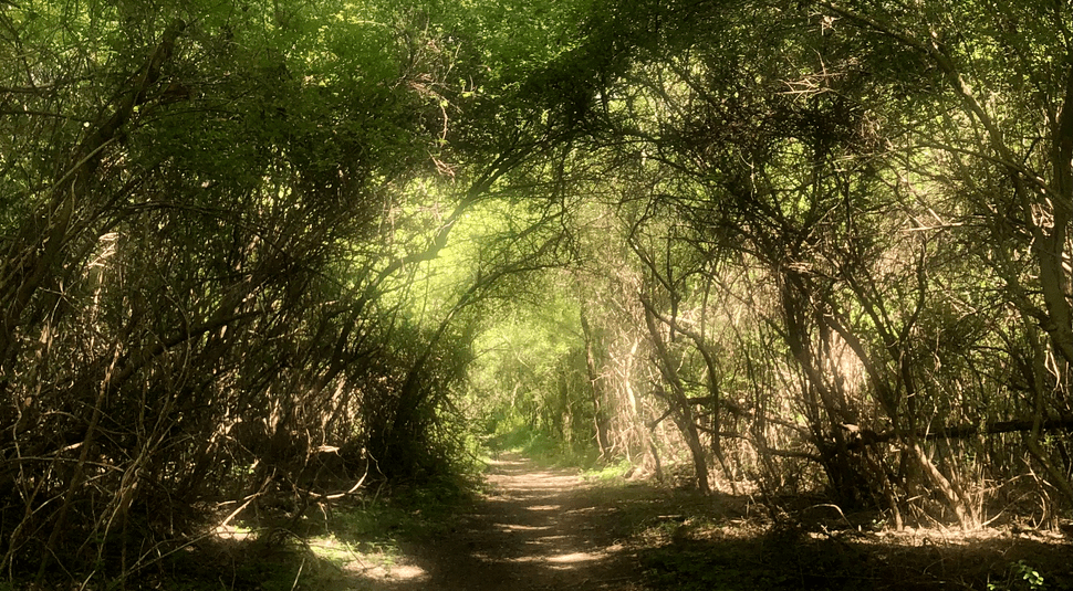 A hiking trail with the sun shining through green trees
